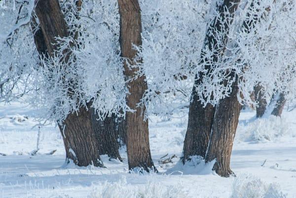 Rio Grande Freeze Art | Brandon Hirt Photo