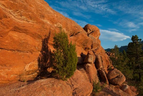 Pine Sunset Art | Brandon Hirt Photo