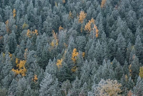 P Ikes Peak Frost Art | Brandon Hirt Photo