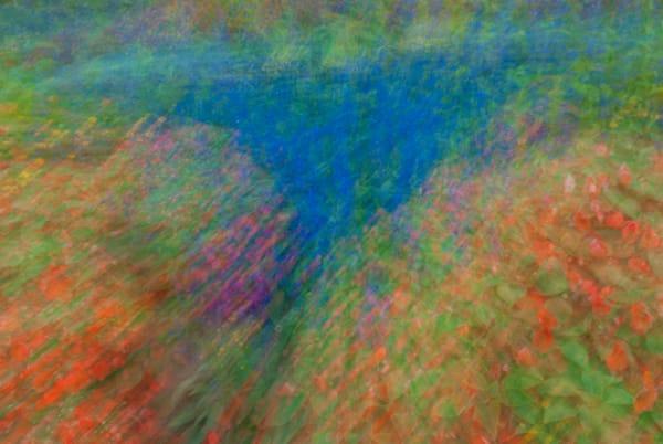 Monet Gardens Art   Brandon Hirt Photo