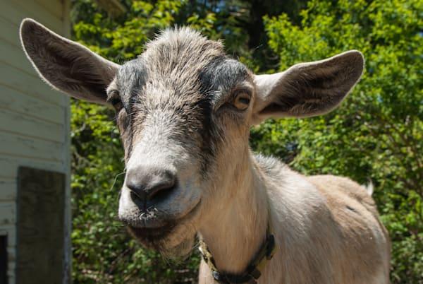 Goatee Art | Brandon Hirt Photo