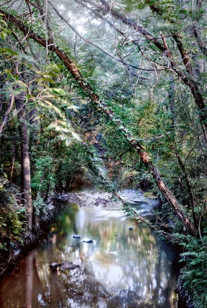 If You Love Trees Collection - color | Shunga Creek. This is a color, fine art photograph of a beautiful stream, by David Zlotky