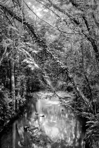 Luminous Light Collection - bw | Shunga Creek. Fine art photographer David Zlotky's golden hour image of a quiet stream in summer.