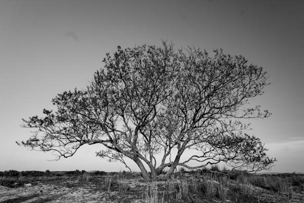 Assateague Island Tree Art | Brandon Hirt Photo