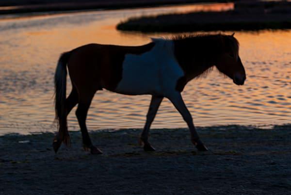Assateague Island Horse Art | Brandon Hirt Photo