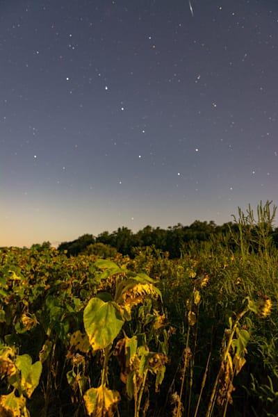 Sunflower Stars Art | Brandon Hirt Photo