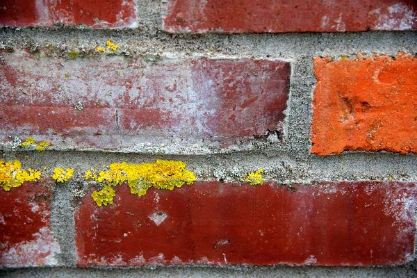 Carlton Brick Wall