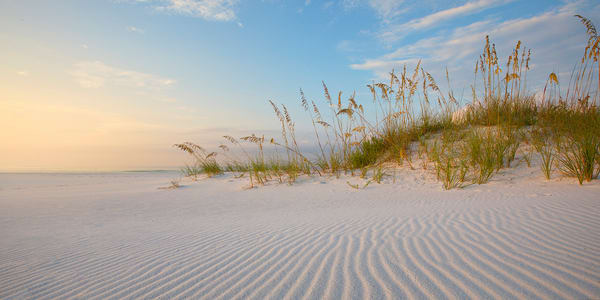 Sea Oats on a sand dune | Emerald Coast, Florida  | Fine Art Landscape Photography on Canvas, Paper, Metal | Photography by Jeff Waldorff
