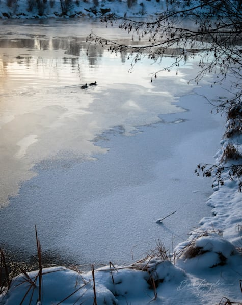 Frozenriver Ducks Oldmill Photography Art | Barb Gonzalez Photography