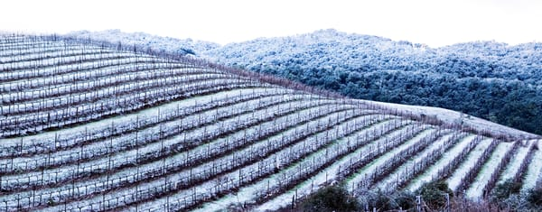 Snowy Vineyard by Josh Kimball Photography