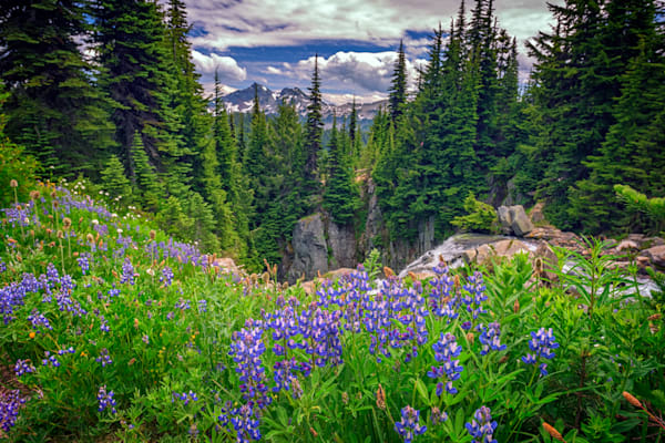 Mount Rainier Meadow by Rick Berk