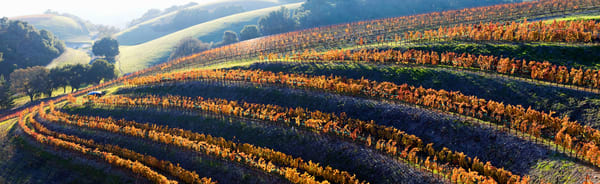 Terraced Autumn Vineyard by Josh Kimball Photography