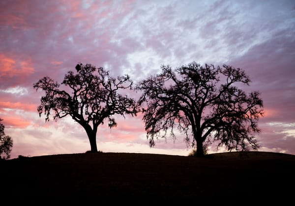 Twin Oaks at Sunset by Josh Kimball Photography
