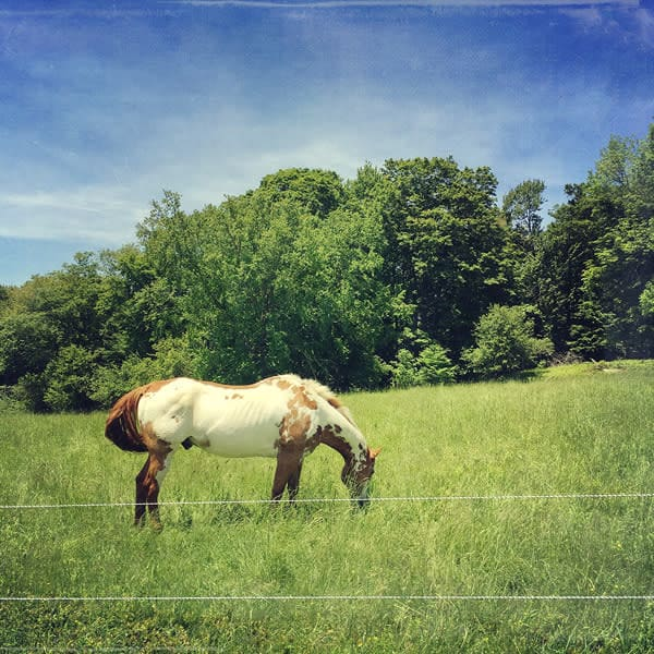 Dappled Horse Photo Tile - for sale as 4x4 and 6x6-inch ceramic tiles