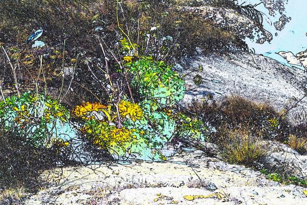 Boiler Bay Foliage