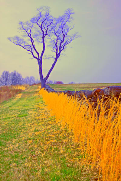 Tall Grass And Tree  Art | toddbreitling