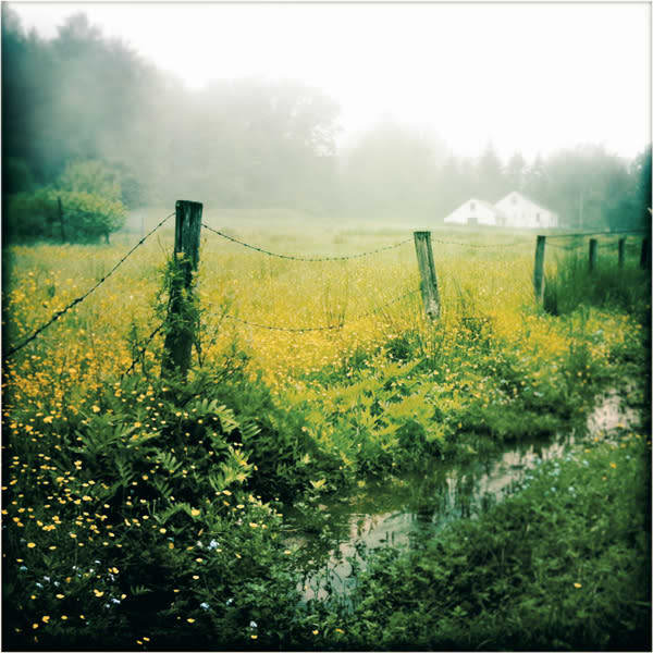 Misty Field of Buttercups Photo Tile - for sale as 4x4 and 6x6-inch ceramic tiles
