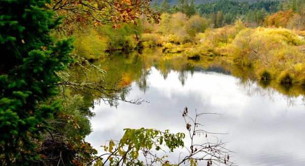 Illinois River Fall Color