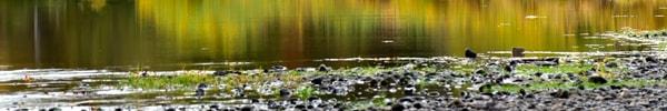 Quiet Illinois River Autumn Reflections