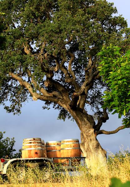 Winery's Backyard by Josh Kimball Photography