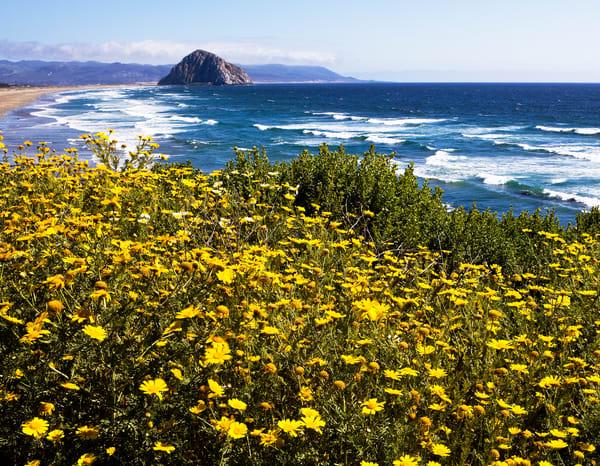 Morro Bay In Spring Photography Art | Josh Kimball Photography