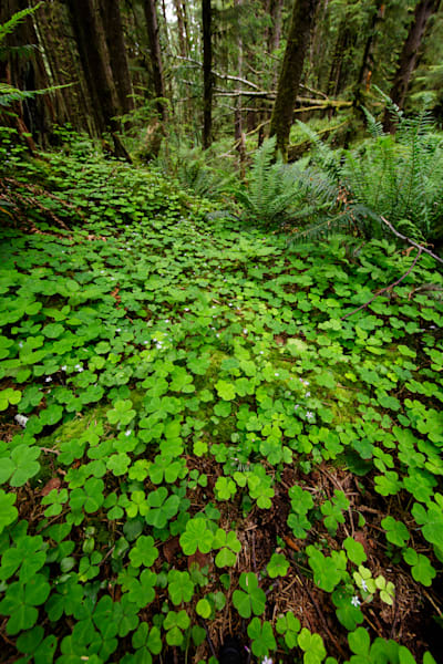 The Forest Floor In Ecola State Park by Rick Berk