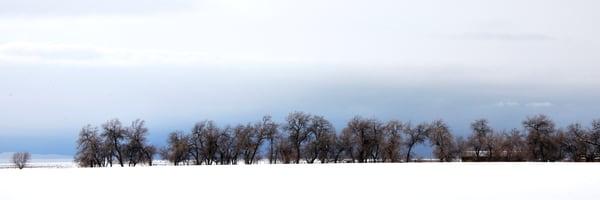 Pasture Tree Line