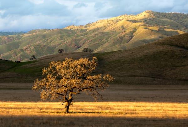 Tehachapi Oak by Josh Kimball Photography
