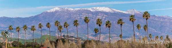 """""""Palms and Topa Snow Caps"""""""