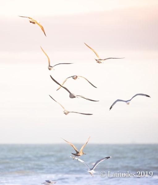 """""""Sunset Flight"""""""