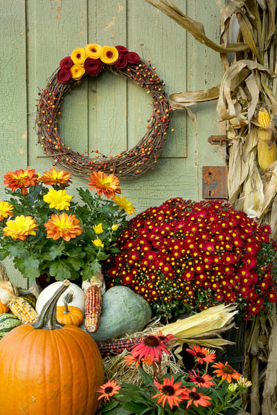 festive fall flowers still life