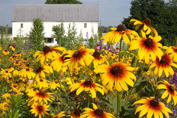 Wildflower Field 16
