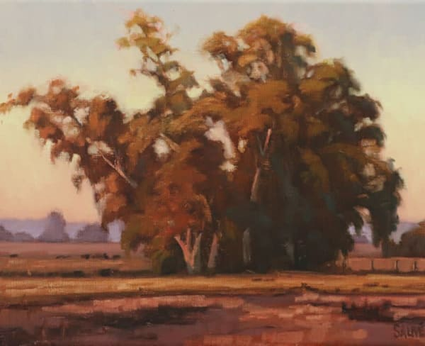 Eucalyptus Trees in the late Afternoon oil painting by Terry Sauve