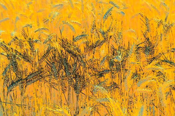 Wheatscape 6343