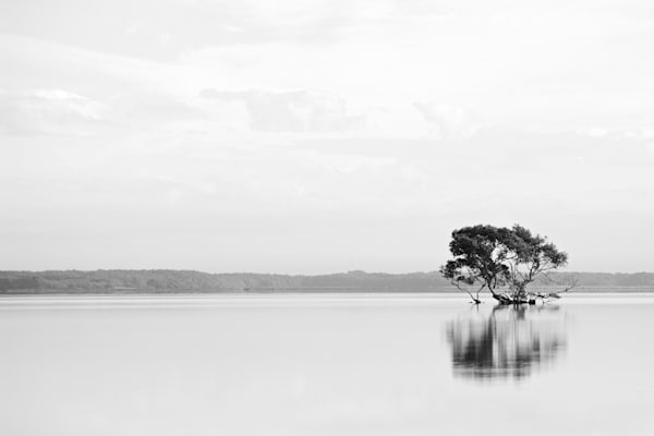 Solo - Stockton NSW Australia