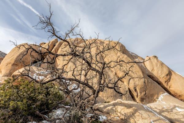 Tangled   Joshua Tree National Park Photography Art | Will Nourse Photography