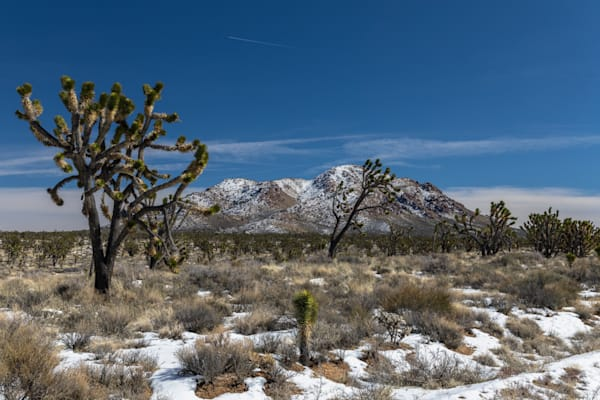 Winter View   Mojave Desert Preserve Photography Art | Will Nourse Photography