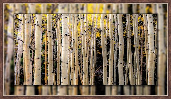 Aspen Trees Fall Lines Pano 3D Bronze Narrow 3D Art Print