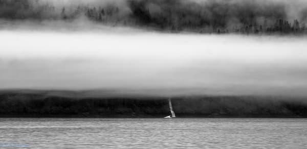 Iceberg & Waterfall in Mist | Endicott Arm,  AK
