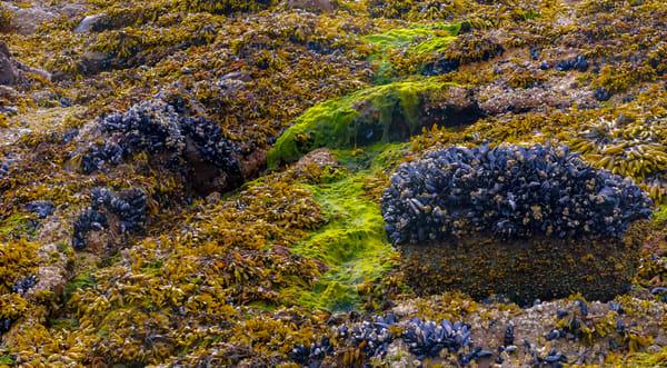 Seaweed & Kelp #2 Eliza Lake | Admiralty ISland