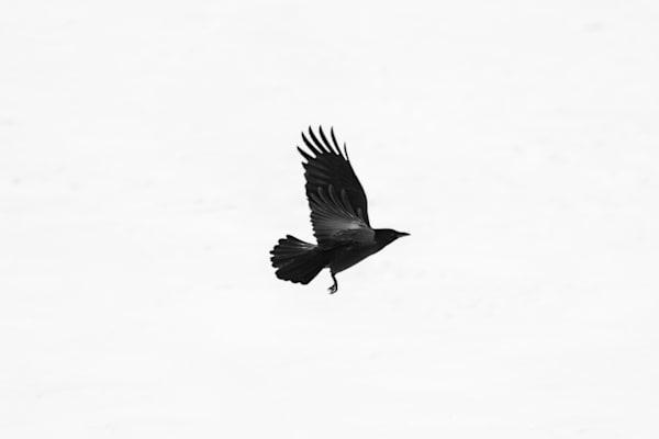 Air Clan Photography Art | Nathan Larson Photography