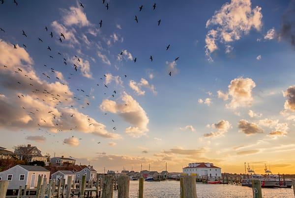 Menemsha Flock of Seagulls