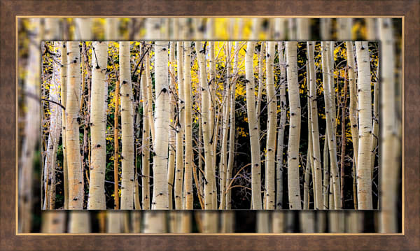 Aspen Trees Fall Lines Pano 3D Bronze Wide