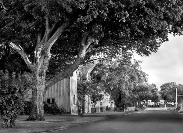 Luminous Light Collection - bw   Homage to the Dutch Golden Age - bw. Beautiful scene of barn and trees in black and white. Fine art photograph by David Zlotky.