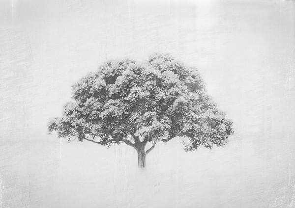 Tree 001 Art | The Mulberry Movement