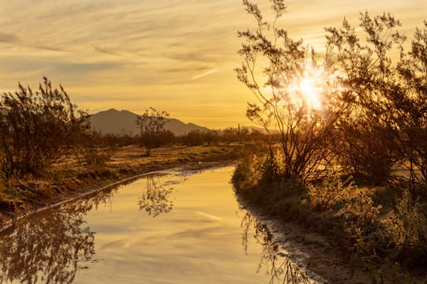Sonoran Desert Reflections after the rain