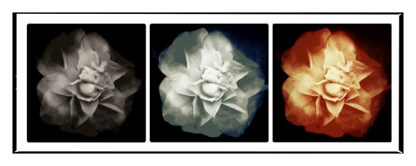 Flower triptych by Daniel Sussman Visuals