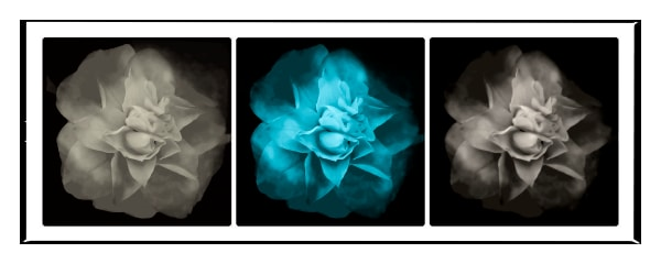 Personal photographs for public places.  Understated yet striking photograph of flowers.
