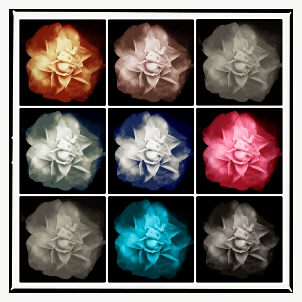 Stunning photographs of flowers made with an iPhone for modern homes and corporate spaces.
