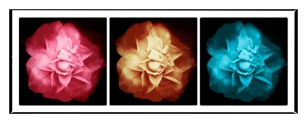3 Flowers, No.7